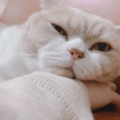 ★迷子の猫★